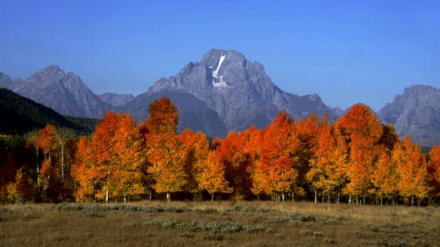trees display vibrant autumn colors below grand teton. - grand teton stock videos & royalty-free footage