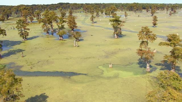vidéos et rushes de trees dot a large louisiana swamp. - algues