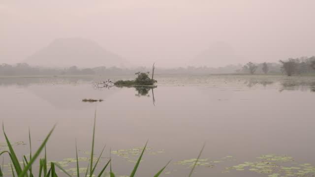 ms trees emerging from placid lake,sri lanka - sri lanka stock videos & royalty-free footage
