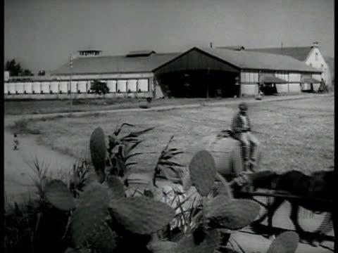 trees farm buildings plants ws farm plantation algerian w/ horse pulling barrel on wheels cactus fg ha ws farmers working on field ws farmers reaping... - barrel cactus stock videos and b-roll footage