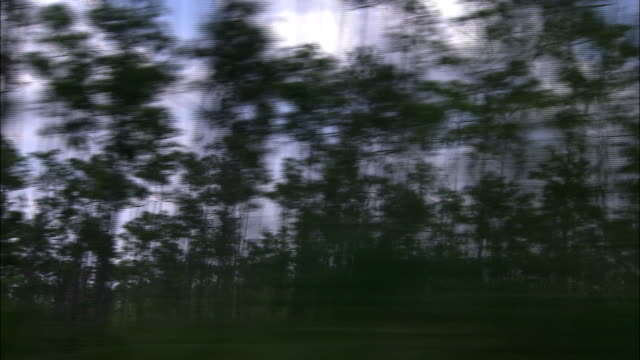 trees grow in a swampy area in the everglades. - everglades national park stock videos & royalty-free footage