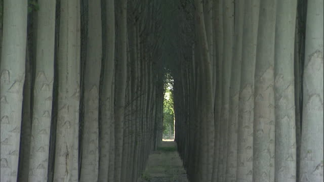 trees grow in orderly rows. - reforestation stock videos and b-roll footage