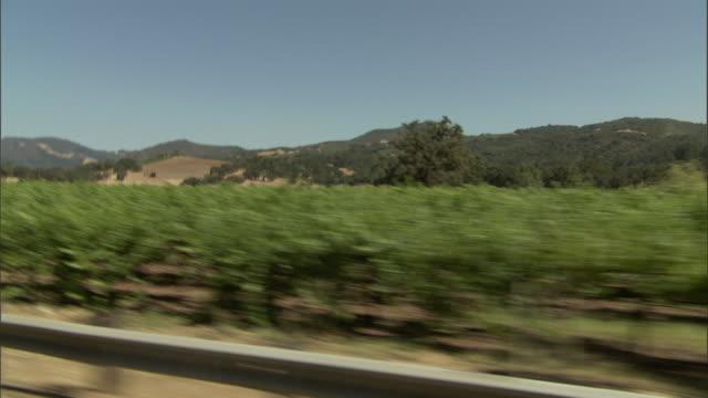 vidéos et rushes de trees grow in orderly rows. - fresno