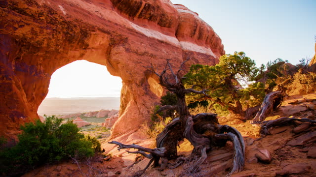 ds trees growing on rock formations - sandy utah stock videos and b-roll footage