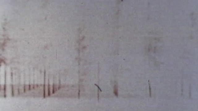 vidéos et rushes de trees hit by nuclear blast - arme nucléaire