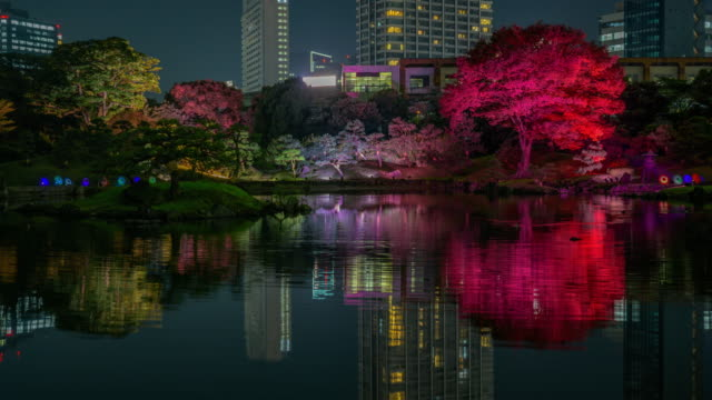 trees illuminate in rikugien gardens, timelapse - satoyama scenery stock videos and b-roll footage