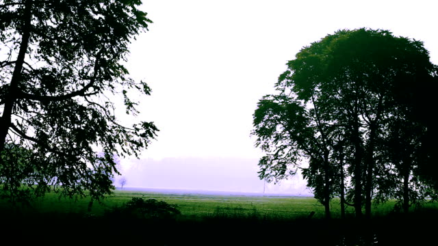trees in a row from the running train - train point of view stock videos & royalty-free footage