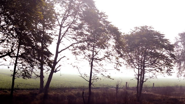 trees in a row (train point of view) - train point of view stock videos and b-roll footage