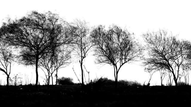 stockvideo's en b-roll-footage met bomen in a row - bare tree