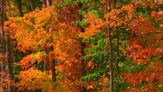 ms tu trees in autumn colors, new canaan, connecticut - connecticut bildbanksvideor och videomaterial från bakom kulisserna