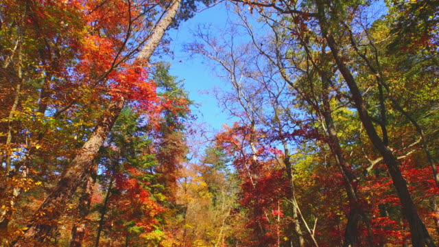 trees in autumn - bare tree stock videos & royalty-free footage