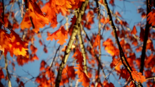 秋の木 - 色が変わる点の映像素材/bロール