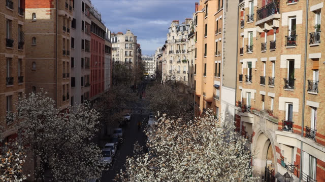 trees in bloom on the first day of spring in paris - take that stock videos & royalty-free footage
