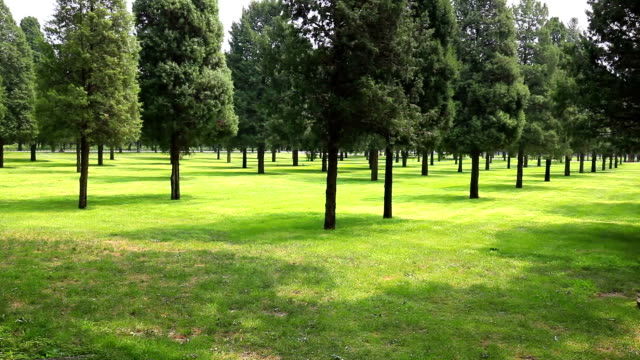 trees in city park - temple of heaven stock videos & royalty-free footage
