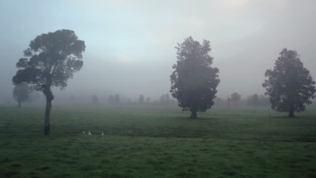 Trees in fog in fristy morning