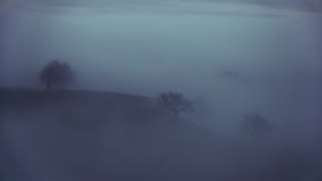 trees in fog - bare tree stock videos & royalty-free footage