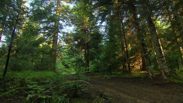 vidéos et rushes de trees in forest - sol phénomène naturel