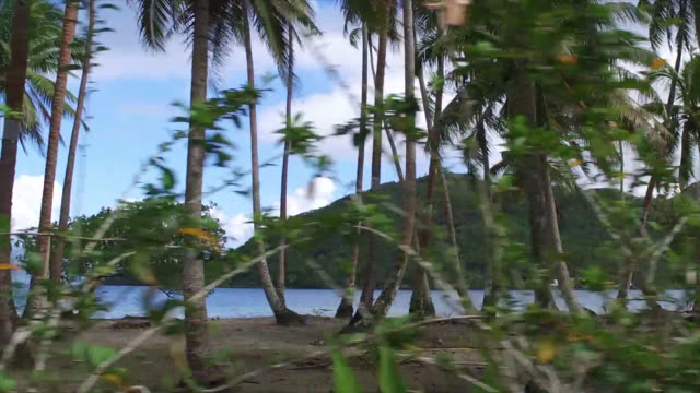 trees in front of the sea, side view of seaside road with tropical vegetation - isola di tahaa video stock e b–roll