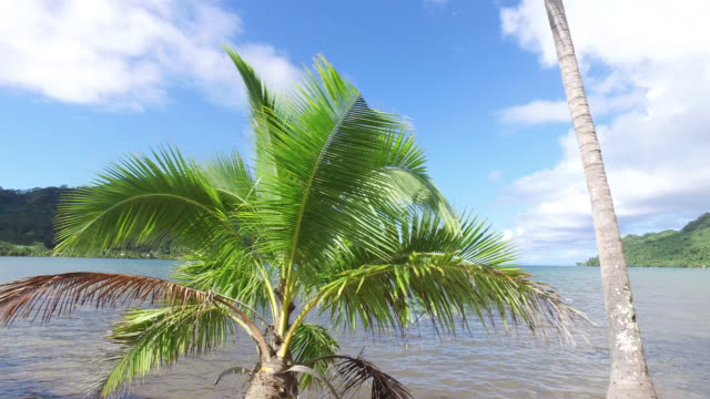 trees in front of the sea, side view of seaside road with tropical vegetation - tahaa island stock videos & royalty-free footage