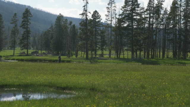 vidéos et rushes de ws trees in grassy meadow, man fishing in distance / yellowstone, wyoming, usa - étang