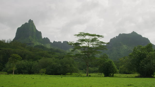 trees in green field near lush mountain landscape / moorea, french polynesia - moorea stock videos and b-roll footage