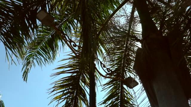 vídeos de stock, filmes e b-roll de trees in indonesia. - slow motion - goodsportvideo