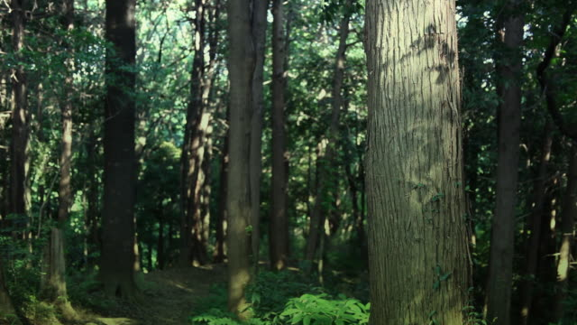 trees in summer forest and a path - trunk tree stock videos and b-roll footage