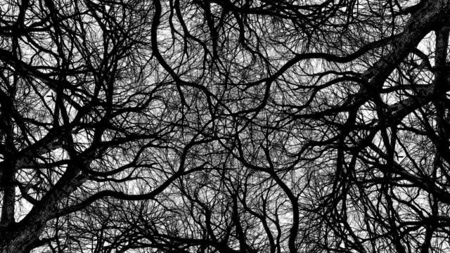vidéos et rushes de arbres en symétrie - loopable - image en noir et blanc