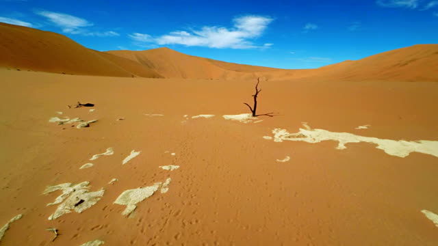HELI Trees In The Dead Vlei