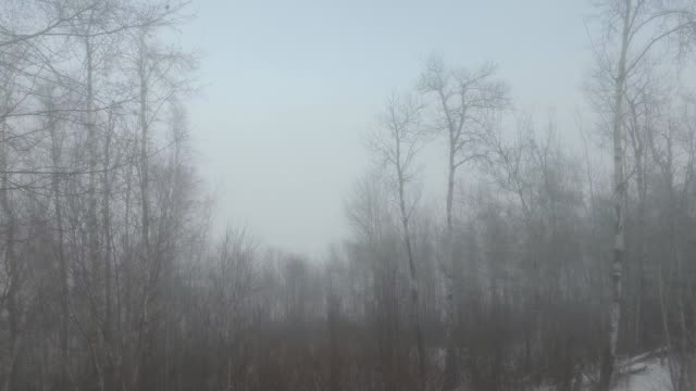 trees in the fog - bare tree stock videos & royalty-free footage