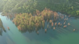 Trees in the Lake