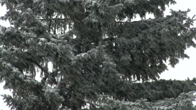 trees in the snow on december 03 2010 in indianapolis indiana - fanghiglia video stock e b–roll