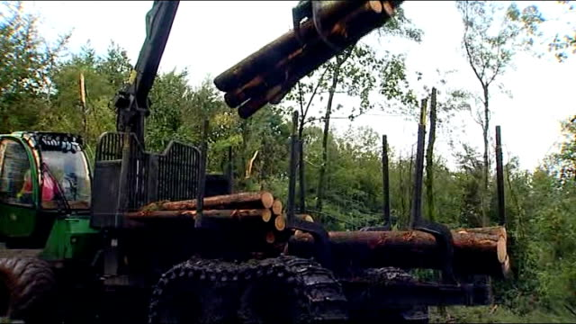 trees in wentwood forest felled in bid to combat larch tree fungal disease wales near newport wentwood forest ext various of mechanical crane with... - forester stock videos and b-roll footage