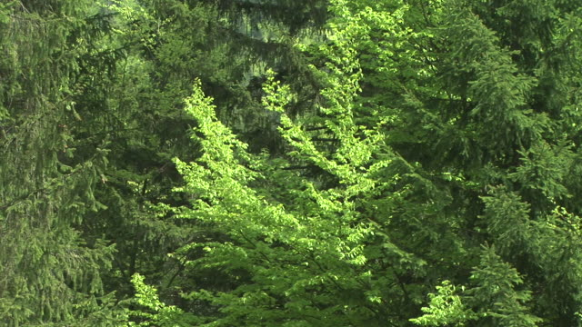 hd: trees in wind - swaying stock videos & royalty-free footage