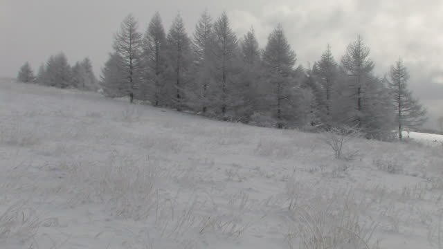 vídeos de stock, filmes e b-roll de trees in winter - prefeitura de fukuoka