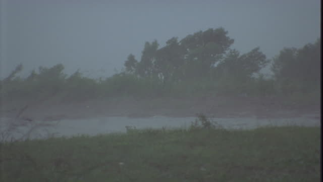 trees leaning in strong winds of hurricane . available in hd. - hurricane stock videos and b-roll footage