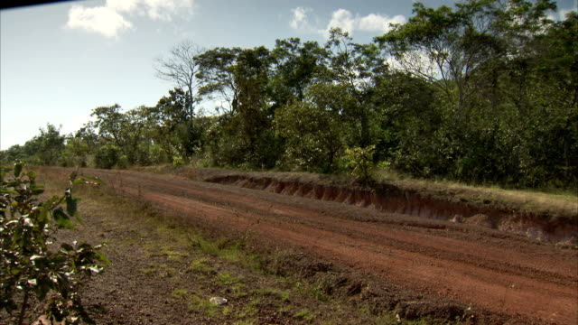 trees line a dirt road on a cloudy day in brazil. available in hd. - roraima state stock videos and b-roll footage