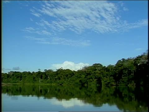 trees line the shore of a lake. - riva del lago video stock e b–roll