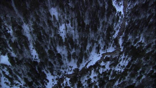 trees lines steep mountain slopes in garmisch partenkirchen, bavaria, germany. - garmisch partenkirchen stock videos & royalty-free footage