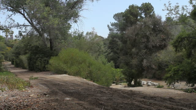 ws trees lining a dirt road / palos verdes, california, united states - palos verdes stock videos & royalty-free footage