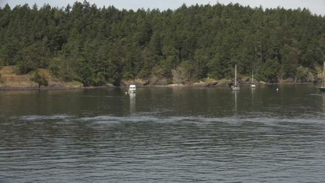 Trees Lining Shoreline of Seattle Lake