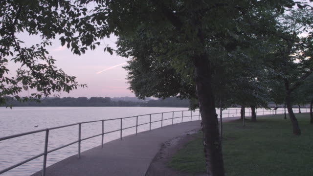 ws trees lining the potomac river / washington dc, united states - potomac river stock-videos und b-roll-filmmaterial
