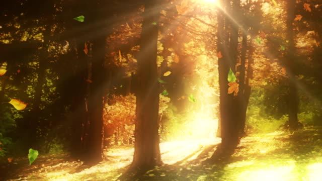 vidéos et rushes de perdre feuilles d'arbres en automne loop - perte