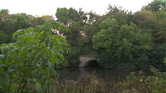 trees near river with cicadas buzzing at horner park on september 12, 2013 in chicago, illinois - ブンブン鳴る点の映像素材/bロール
