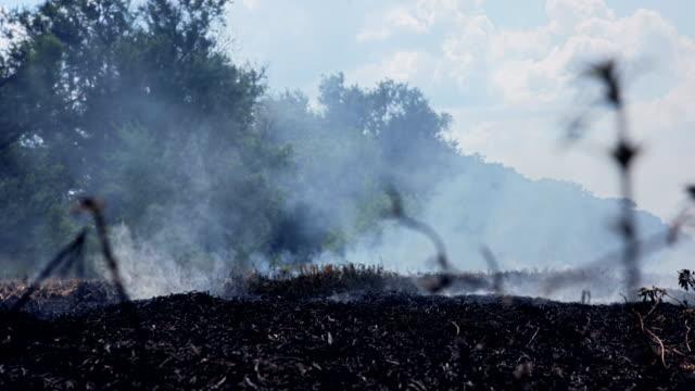 Trees near smoky black burned field