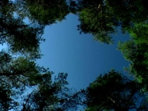 vidéos et rushes de arbres sur le ciel bleu-boucle - membre partie du corps