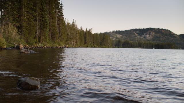 vidéos et rushes de arbres sur le bord du lac d'or, la californie nordique au coucher du soleil - parc naturel