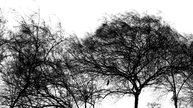 trees on white background - bare tree stock videos & royalty-free footage