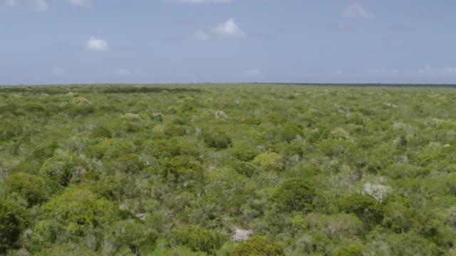 WS AERIAL POV Trees over Mona Island / Isla de Mona, Puerto Rico, United States