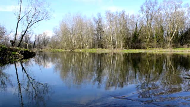 alberi riflette in acqua di fiume flusso - fiume video stock e b–roll